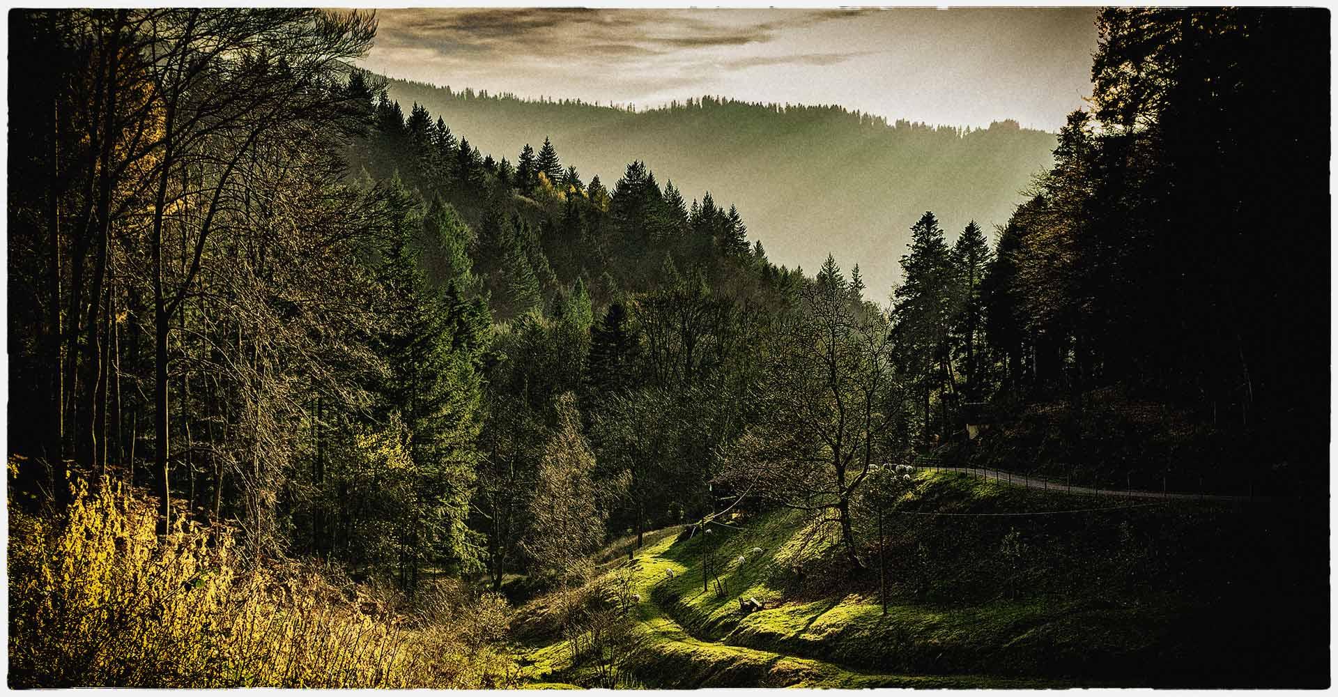 schwarzwald-couture-blackforest